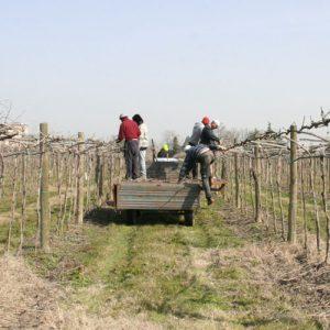 Servizi agricoli conto terzi